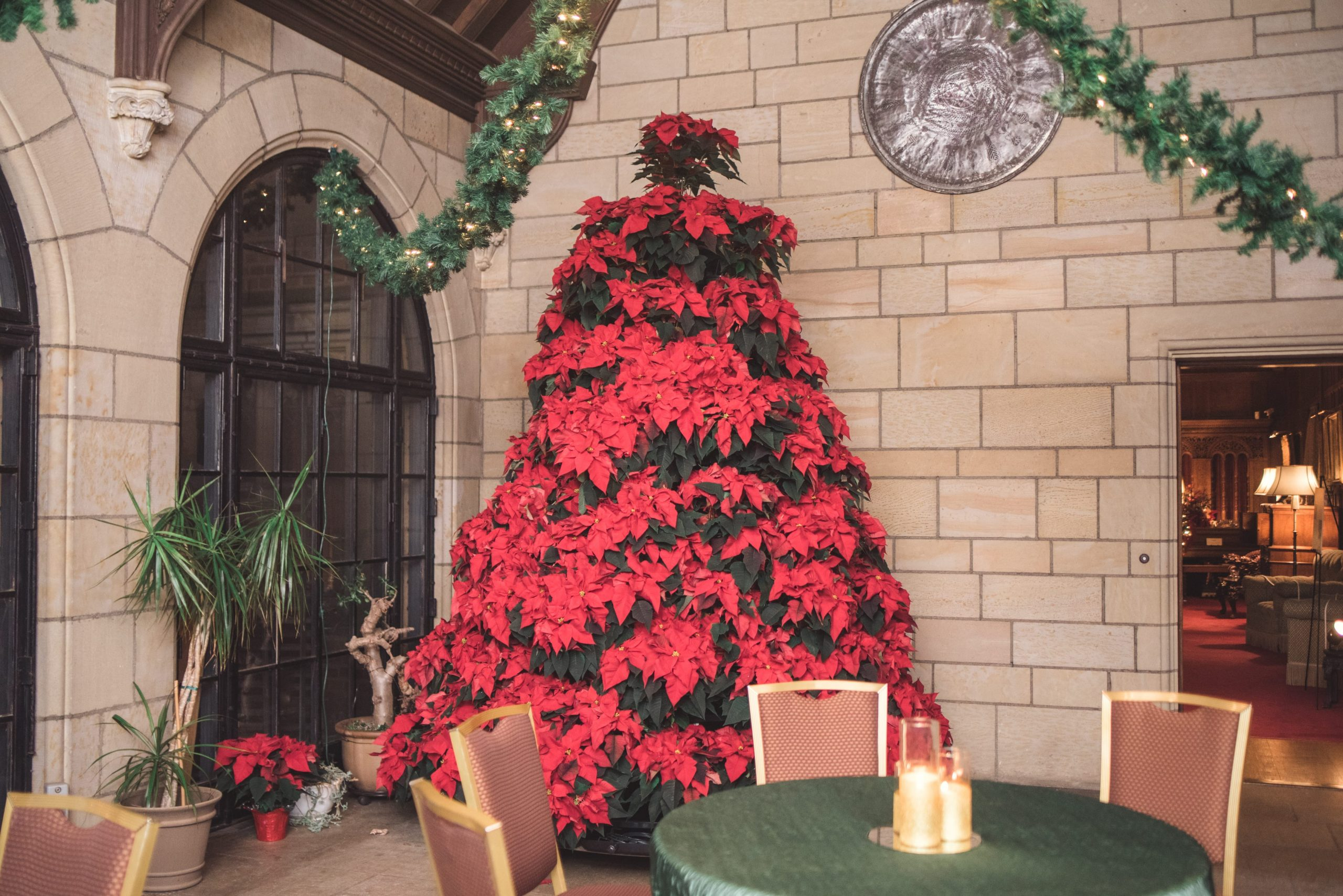 Tree out of poinsettias