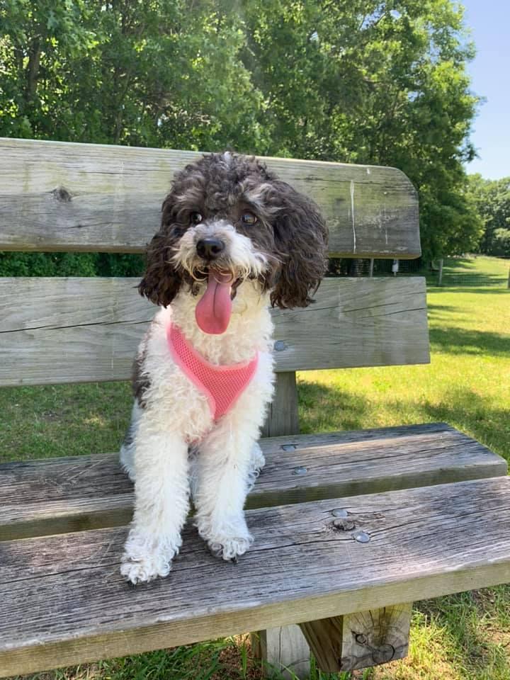 dog on bench