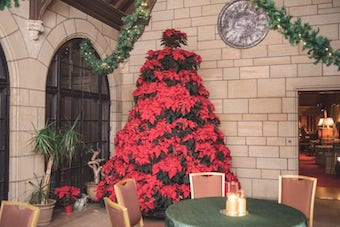 Christmas Tree at Meadow Brook